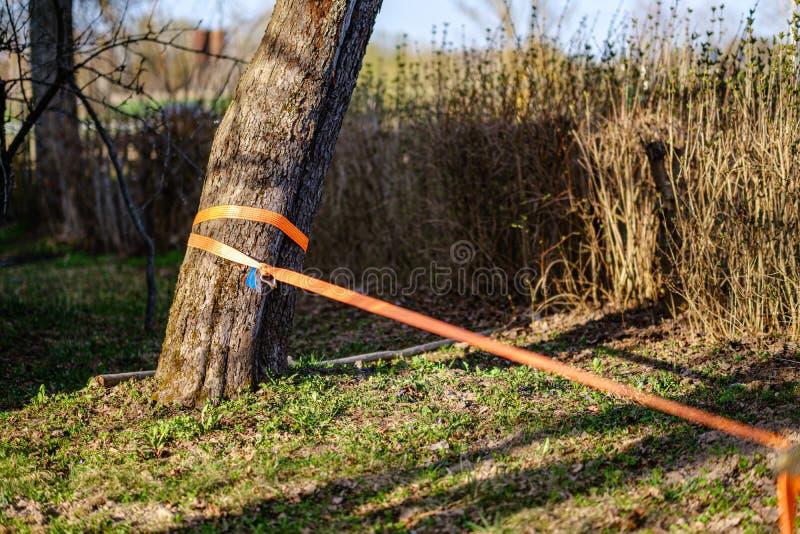 strope pour la marche de fil étirée entre les arbres photo stock