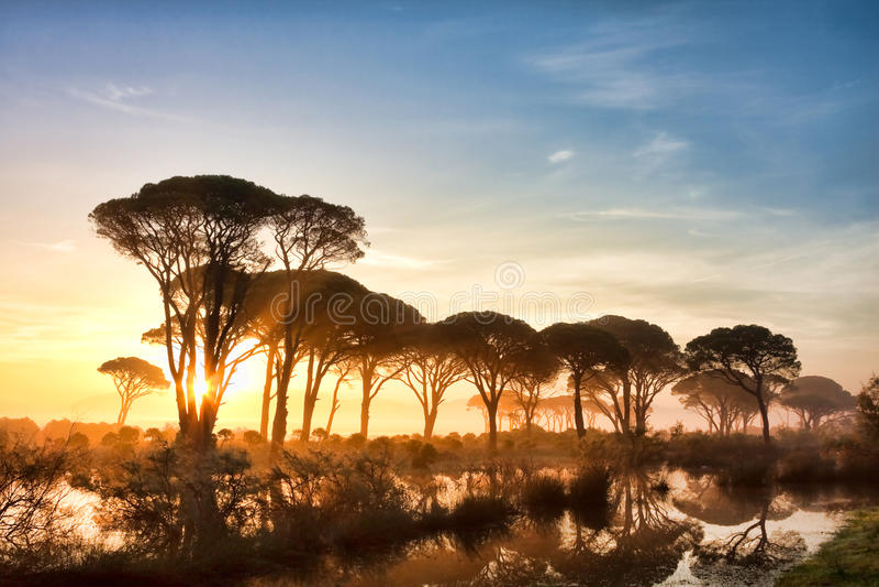 Strophylia forest at sunrise stock photos