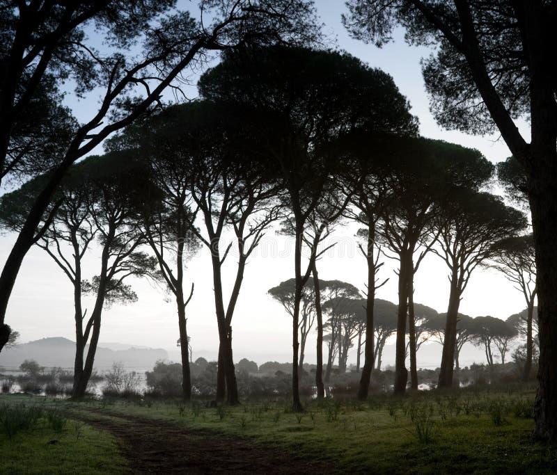 Strophylia forest at sunrise royalty free stock image
