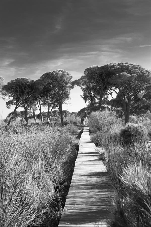 Strophylia wetlands stock photos