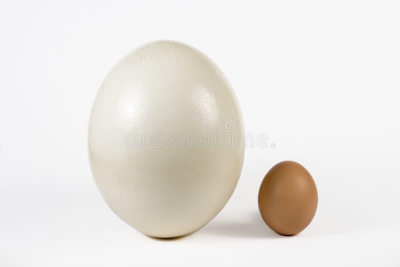 struś kurny jajko zdjęcie royalty free