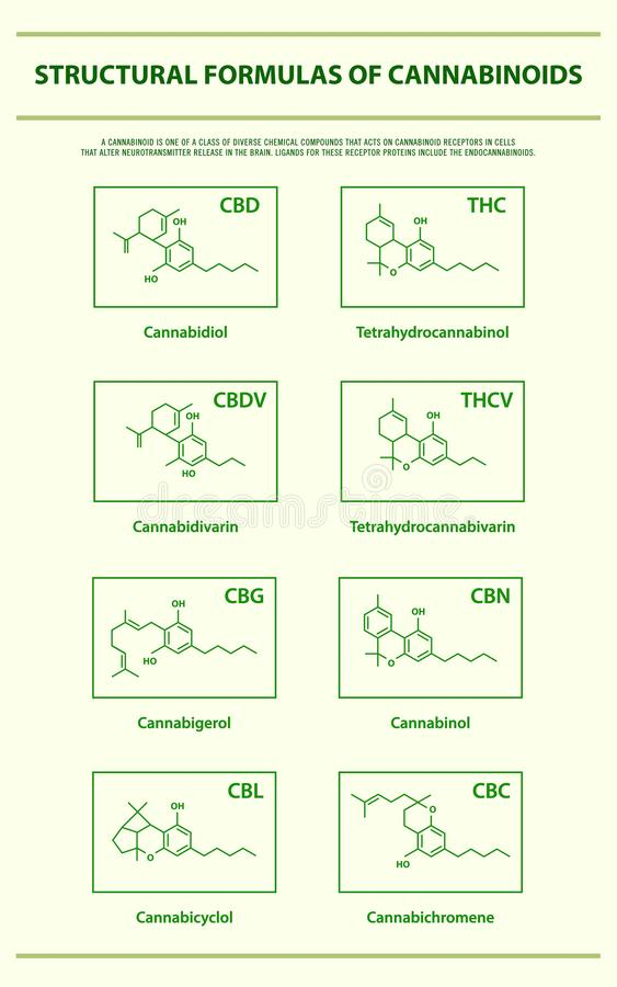 Structural Formulas of Main Natural Cannabinoids vertical infographic royalty free illustration