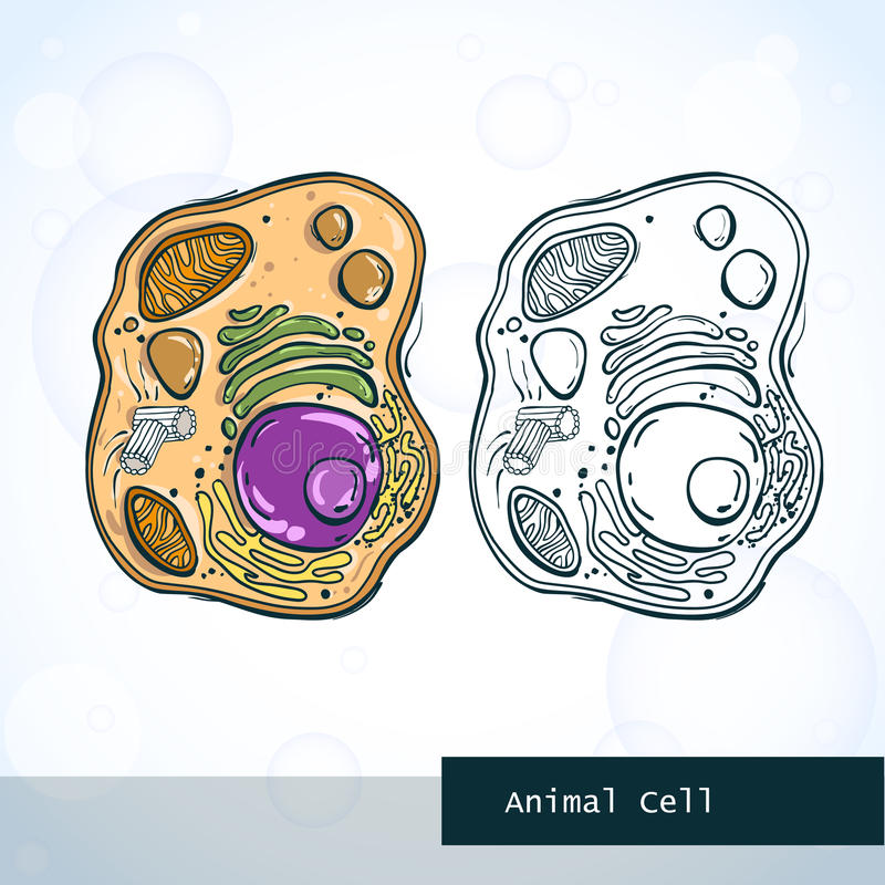 Structure of animal cell stock illustration