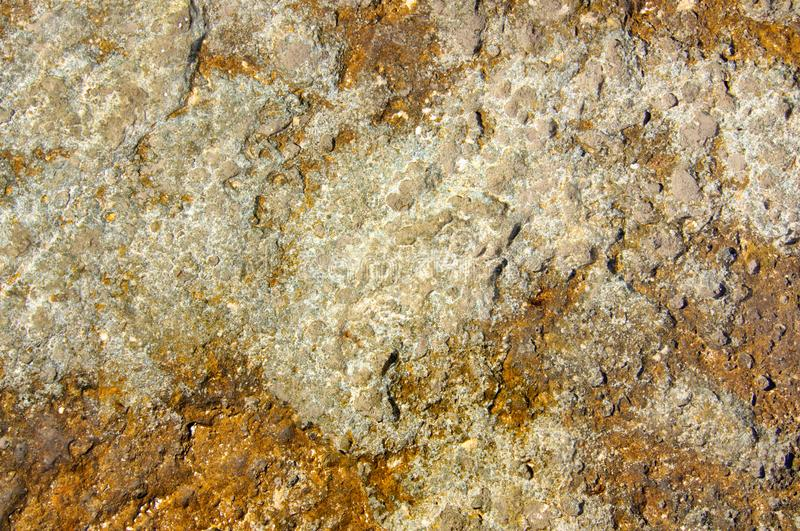 Structure of coastal sea stone. Surface of sea stone, structure, texture. Background stock image