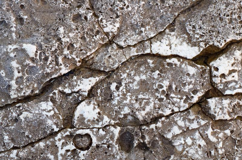 Structure of coastal sea stone. Surface of sea stone, structure, texture. Background royalty free stock images