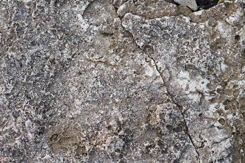 Structure of coastal sea stone. Surface of sea stone, structure, texture. Background stock photos