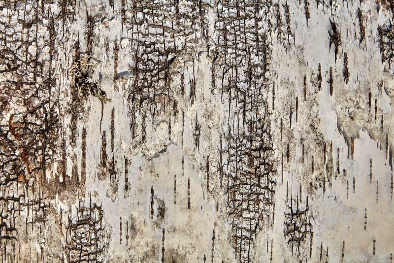 Structure d'écorce d'arbre, texture pour le contexte photographie stock libre de droits