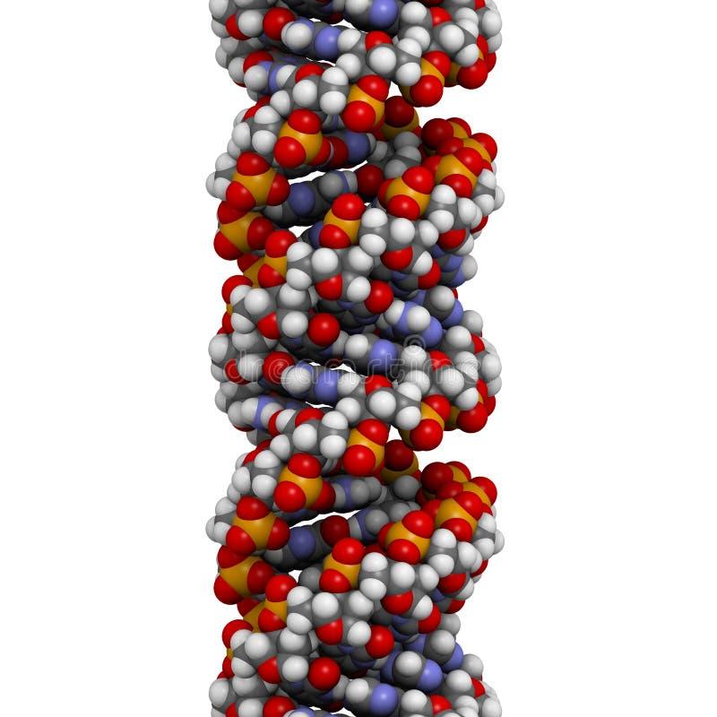 Structure d'ADN (conformation d'A-DNA) illustration stock