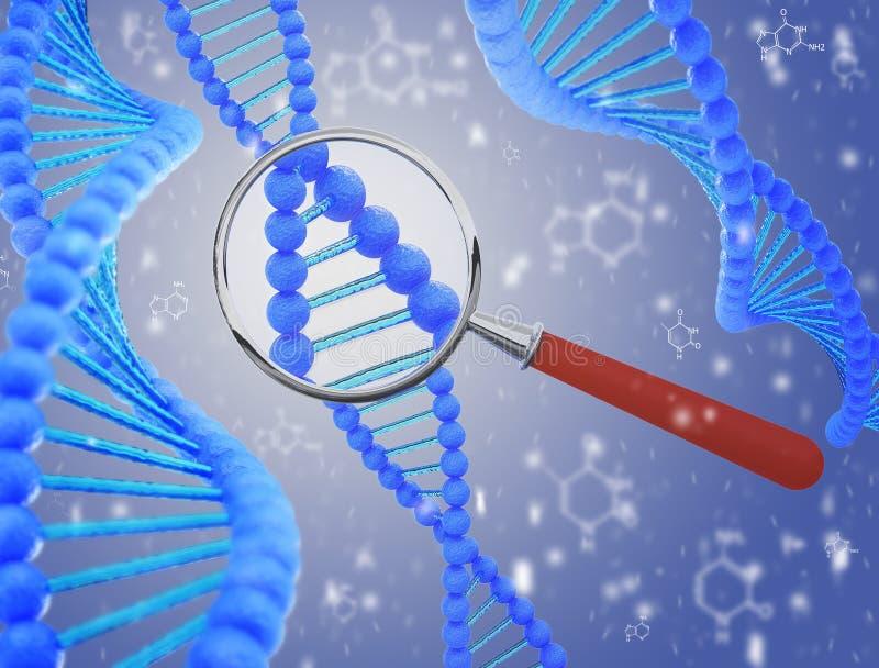 Structure de l'ADN sous une loupe 3d rendent images libres de droits