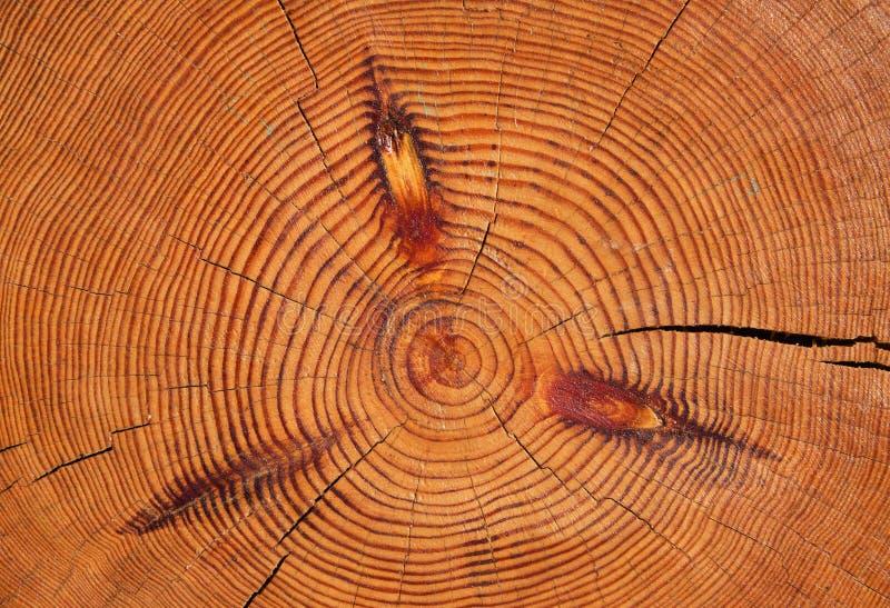 Structure de logarithme naturel photos libres de droits