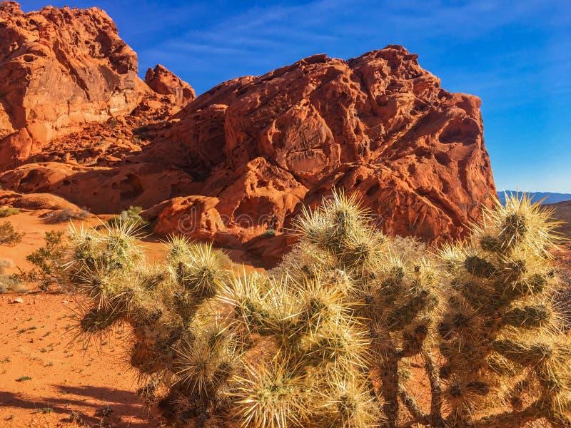 Structure et cactus rouges de roche en vallée du feu, Nevada, Etats-Unis photos stock