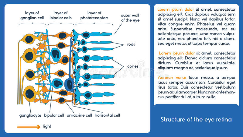 The structure of the eye retina. Infographic scheme stock illustration