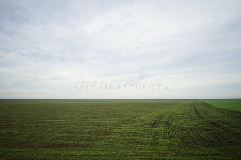 Green field of growing wheat. Structure of growing wheat in a clear sky day, winter time, as seen from the window of Oltenita train in southern Romania, an stock images