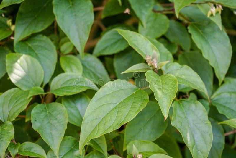 Structure haute étroite de vue de feuilles de plante verte images stock