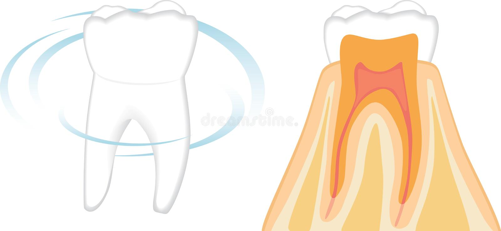 Structure of the healthy tooth royalty free stock photos