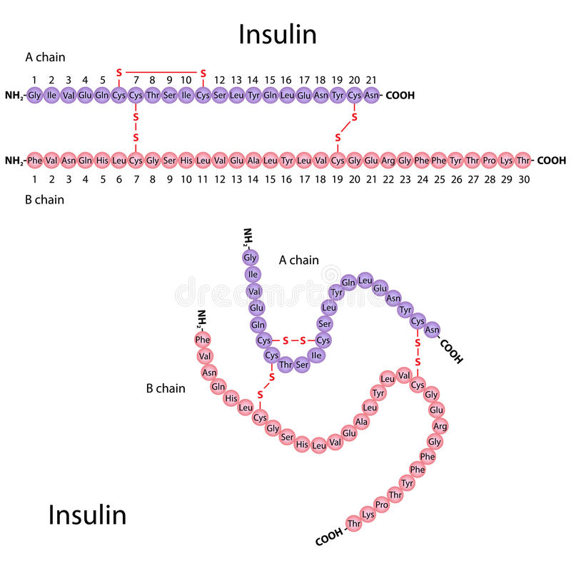 Structure of human insulin royalty free illustration
