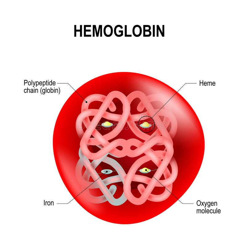 Free Structure Of Human Hemoglobin Molecule Royalty Free Stock Photo - 102593315