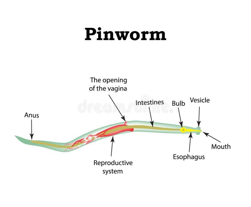 pinworms giardia)