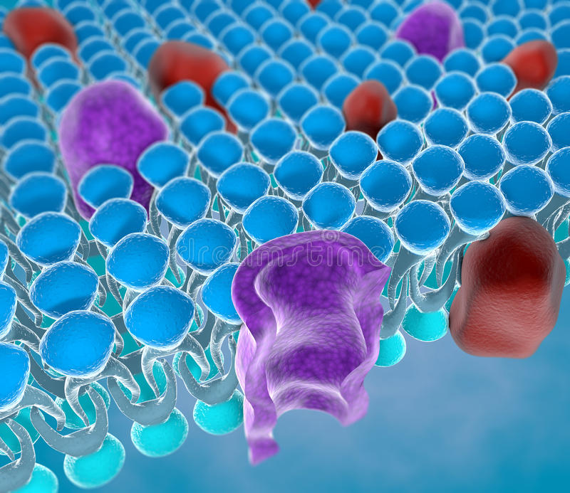 Structure of the plasma membrane royalty free stock photo