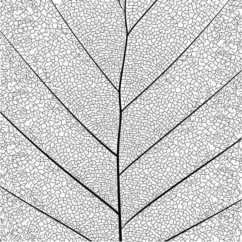 Structure simple détaillée élégante de feuille de série botanique dans le style de croquis noir et blanc sur le fond blanc illustration libre de droits