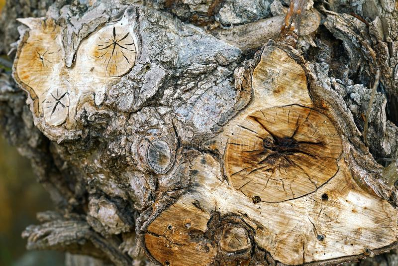Structure of the trunk of old trees show details royalty free stock images
