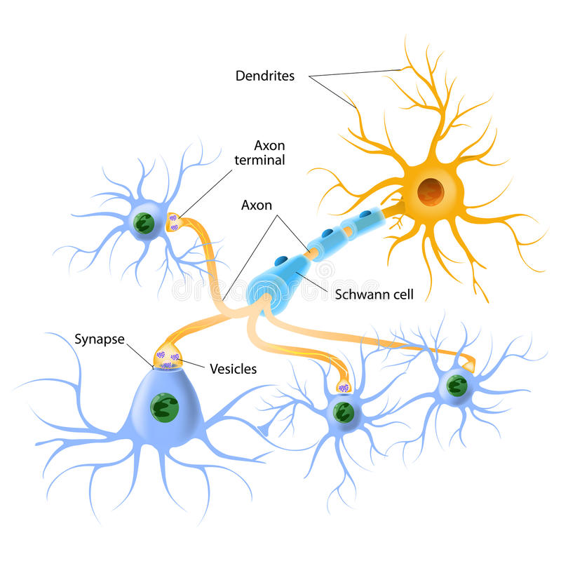 Structure of a typical chemical synapse vector illustration