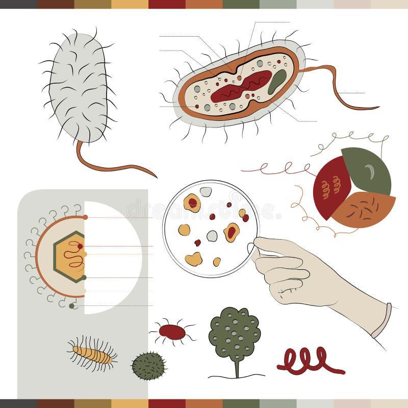 Structuur van bacteriën vector illustratie