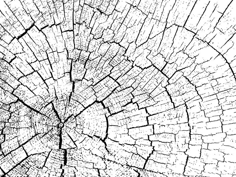 Structuur van barsten van hout vector illustratie