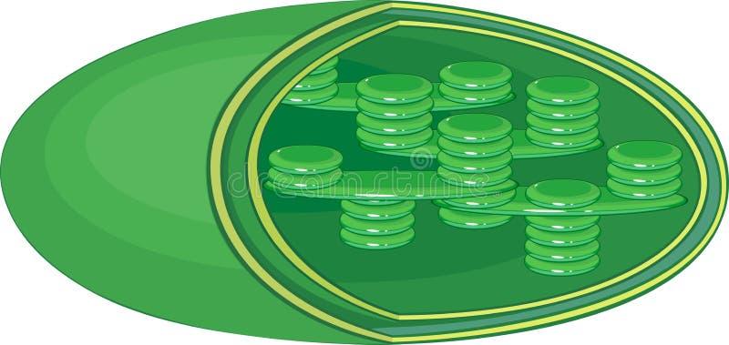Structuur van Chloroplast stock illustratie