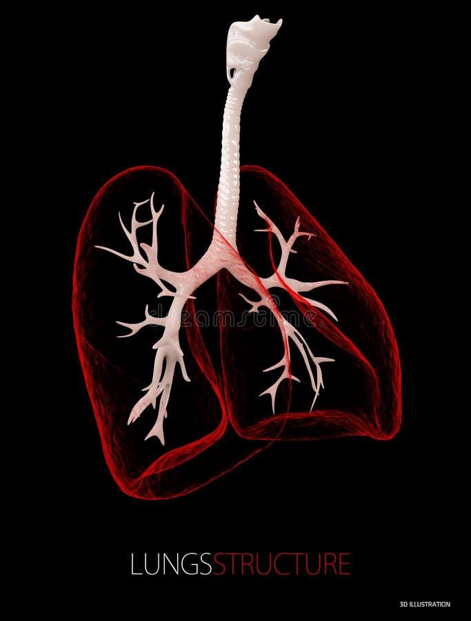 Structuur van de longen, Gezondheidszorg geïsoleerde zwarte 3D Illustratie vector illustratie