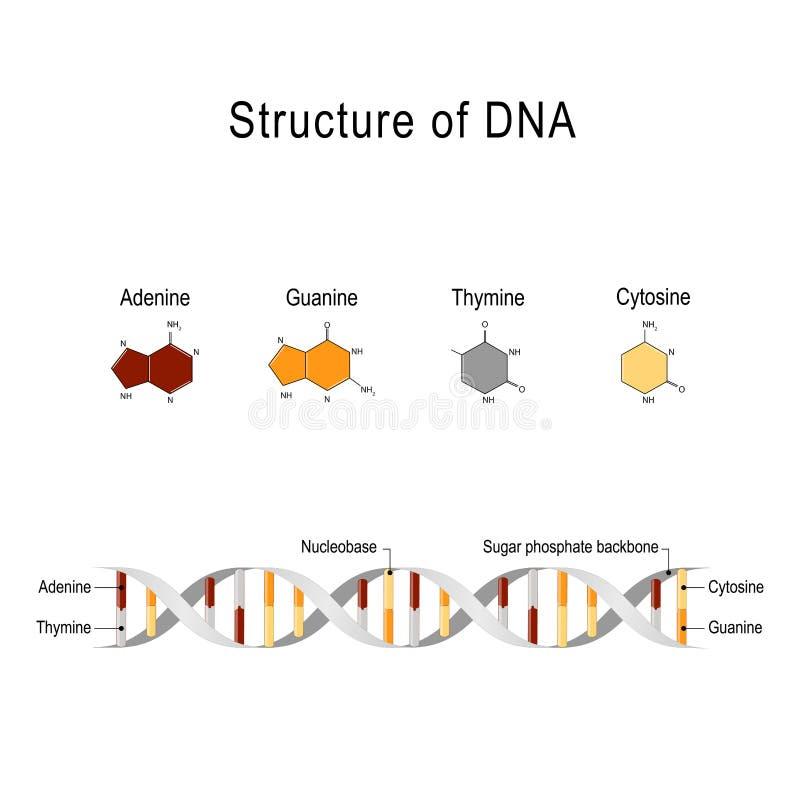 Structuur van DNA stock illustratie