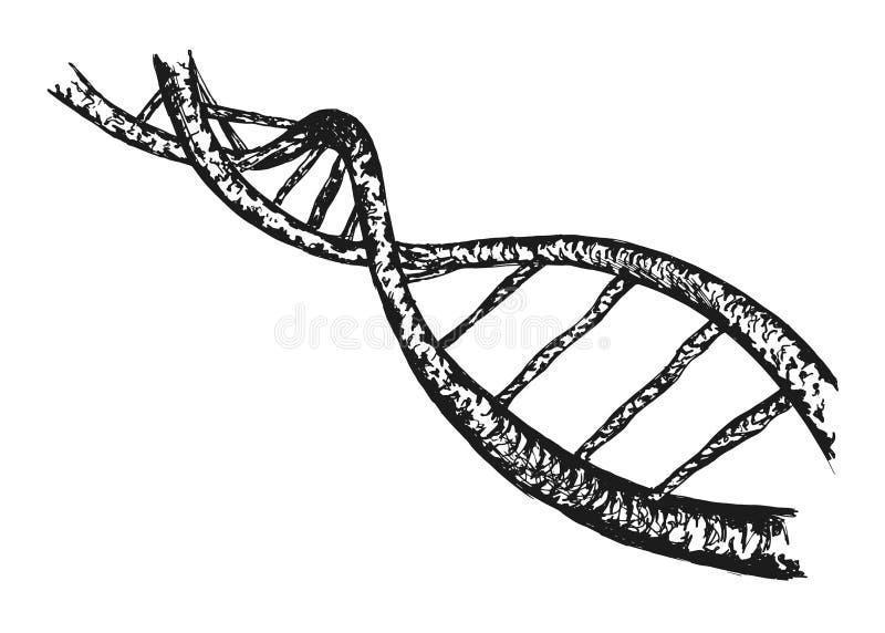 Structuur van DNA royalty-vrije illustratie