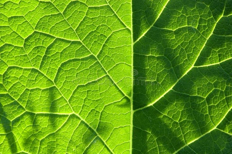 Structuur van een groen blad royalty-vrije stock fotografie