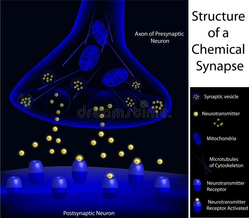 Structuur van een synaps royalty-vrije illustratie