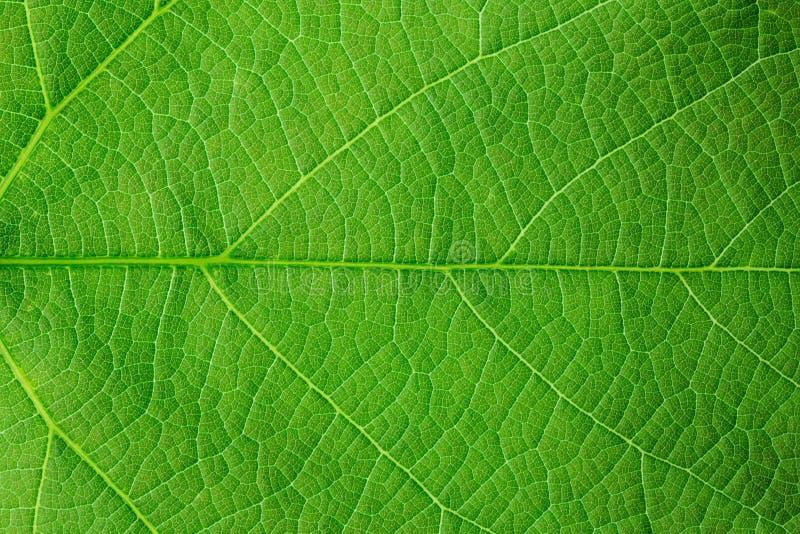 Structuur van groen blad royalty-vrije stock afbeeldingen
