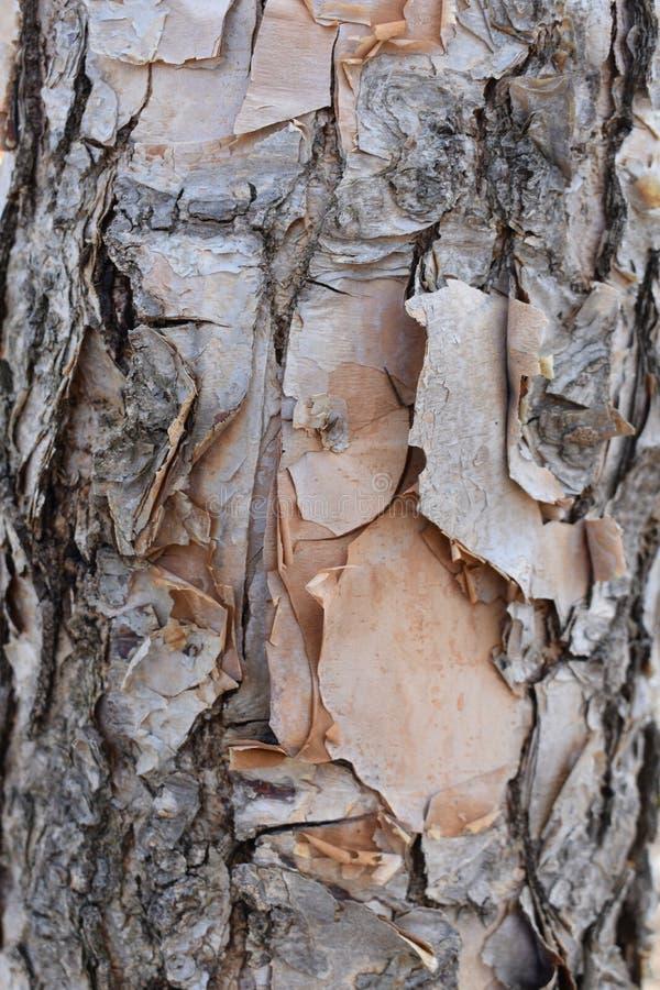 Strugać Drzewną barkentynę obrazy stock