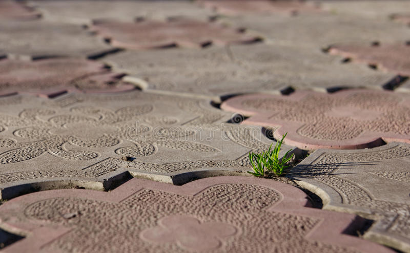 Struggling. A tiny bush of grass struggling to survive by growing through the concrete tile. Shallow DOF stock photos