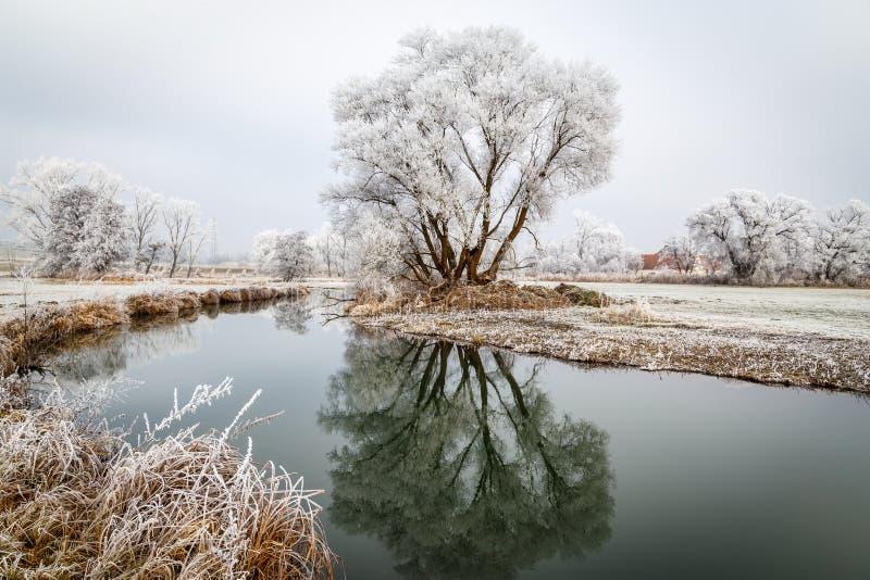 Struiken en bomen coverd met rijp stock afbeeldingen