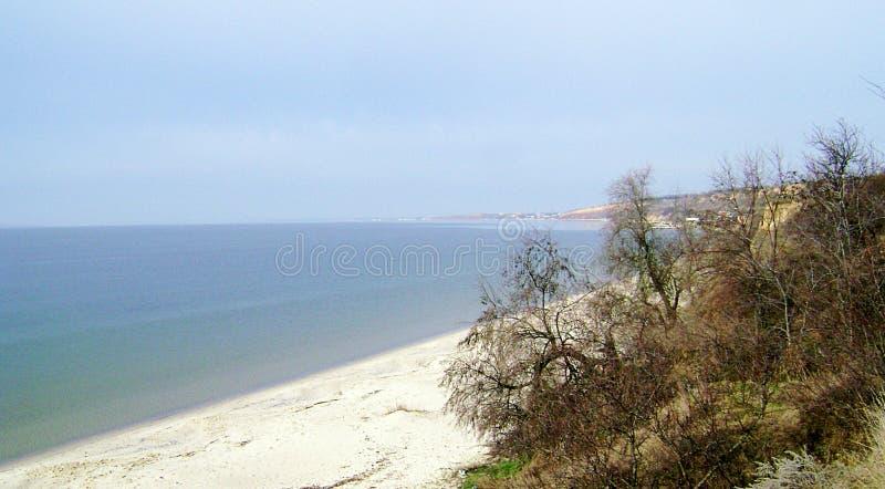 Struiken op de achtergrond van het overzees rust De Zwarte Zee in zonnige dag stock afbeeldingen