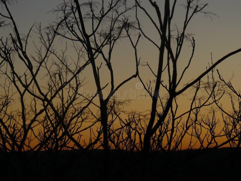 Struiken tijdens zonsondergang royalty-vrije stock afbeeldingen