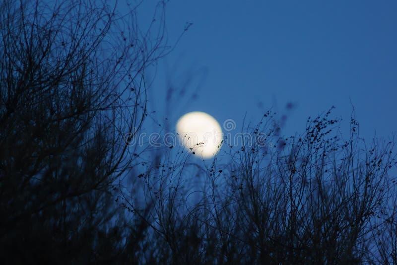 Struikensilhouet en maan royalty-vrije stock afbeelding
