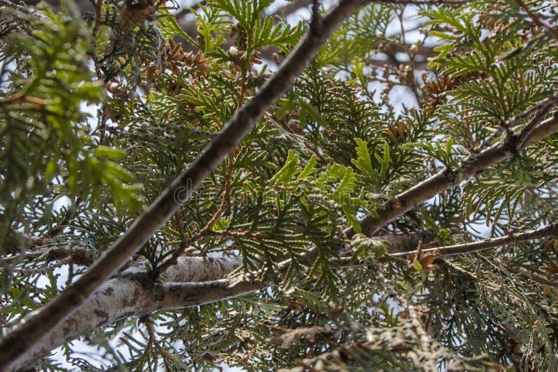 Struikgewas van een boom stock foto