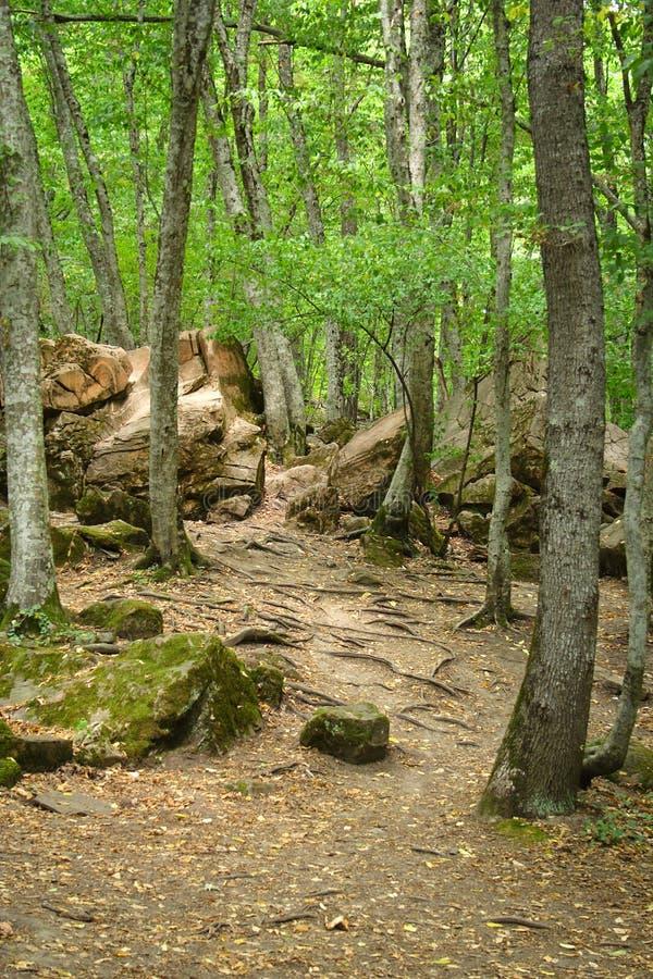 Struikgewas van het bos stock afbeeldingen