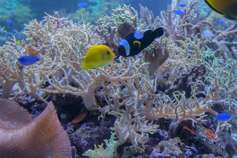 Struikgewas van roze koralen stock fotografie