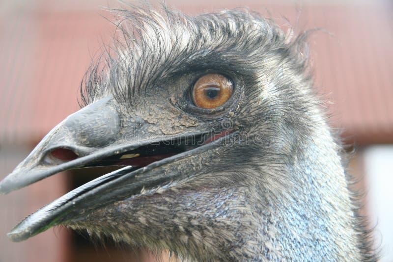 Struisvogel royalty-vrije stock afbeelding