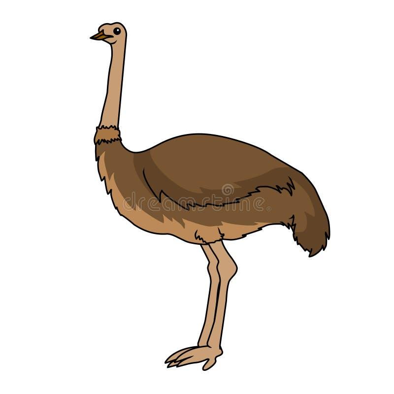 Struisvogel vectorillustratie Het beeldvector van de struisvogelvoorraad stock illustratie