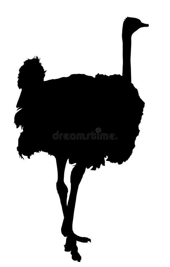 Struisvogel vectorsilhouet vector illustratie
