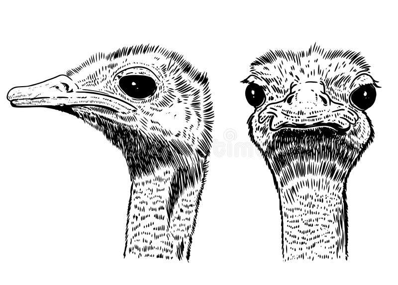 Struisvogelillustratie op witte achtergrond Ontwerpelement voor affiche, kaart, t-shirt, banner stock illustratie