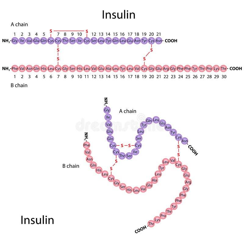 Struktur av mänsklig insulin royaltyfri illustrationer