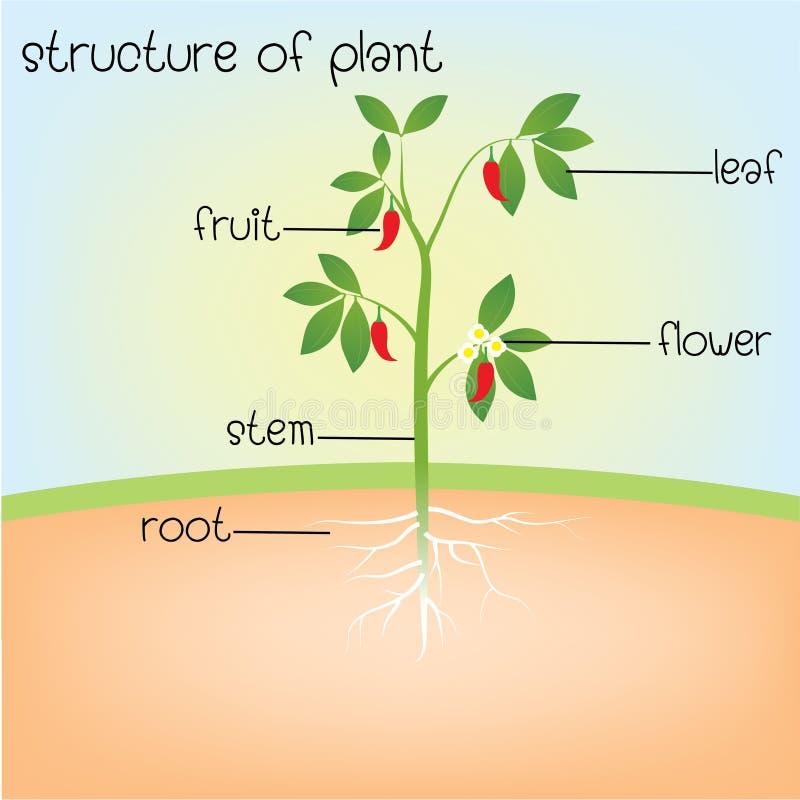 Struktur av växten stock illustrationer